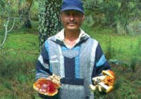 Don Pedro from San Isidro holds a variety of forest fungi