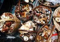 A pickup truck full of Tlaxcala mushrooms